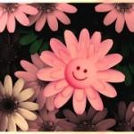 flowers-717609__180